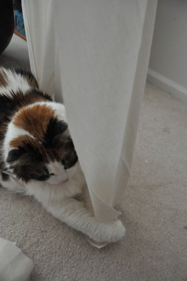 Maya tries her paws at draping on the dress form.