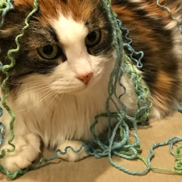 Mermaid cat